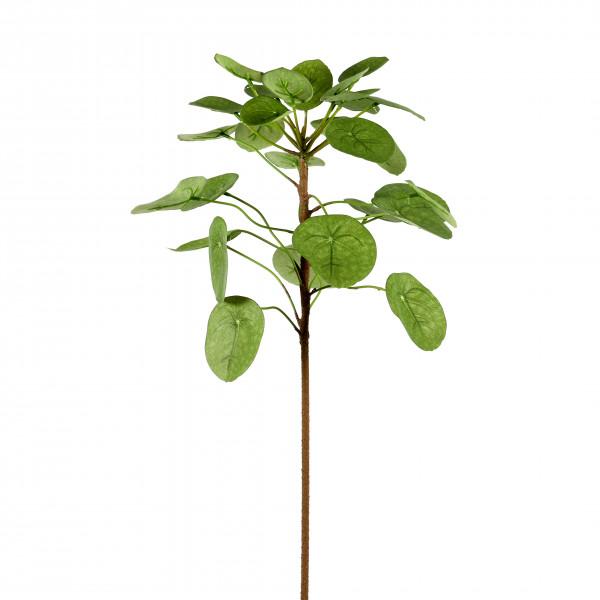 Zwergpfeffer, langstielig, 106 cm, grün