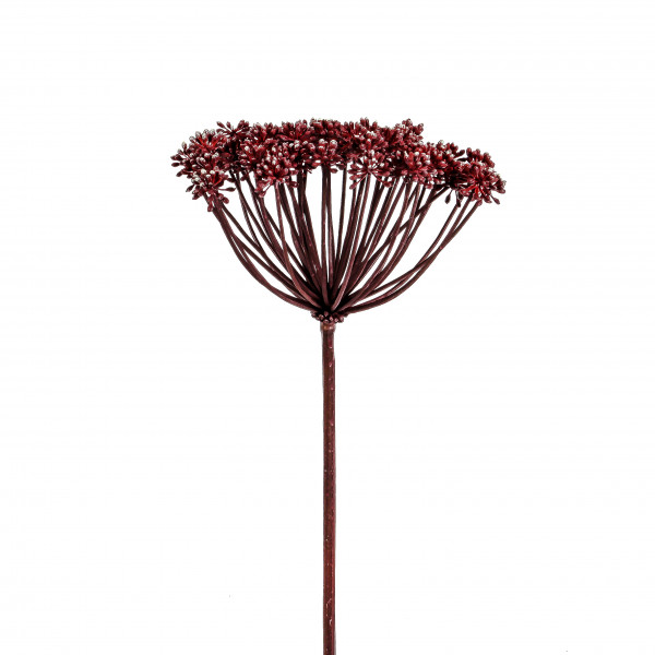 Dill, 50cm, burgund