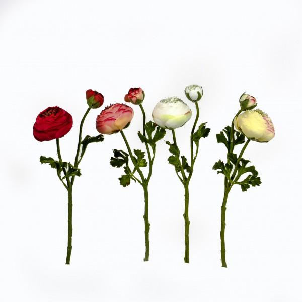 Ranunkel,gefüllt,36cm,1 Blüte, 1 Knospe