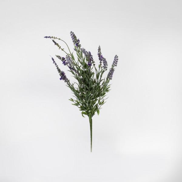 Lavendelbusch x 19, 50 cm