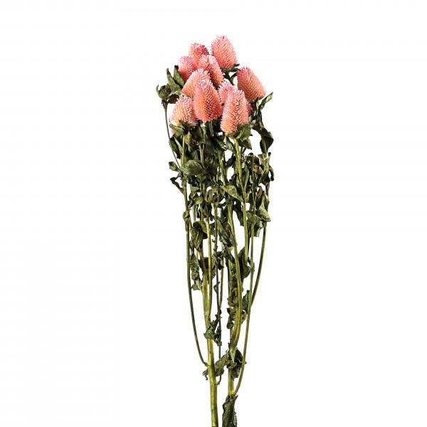 Strawberry Brunch pink Bund 2 Stück