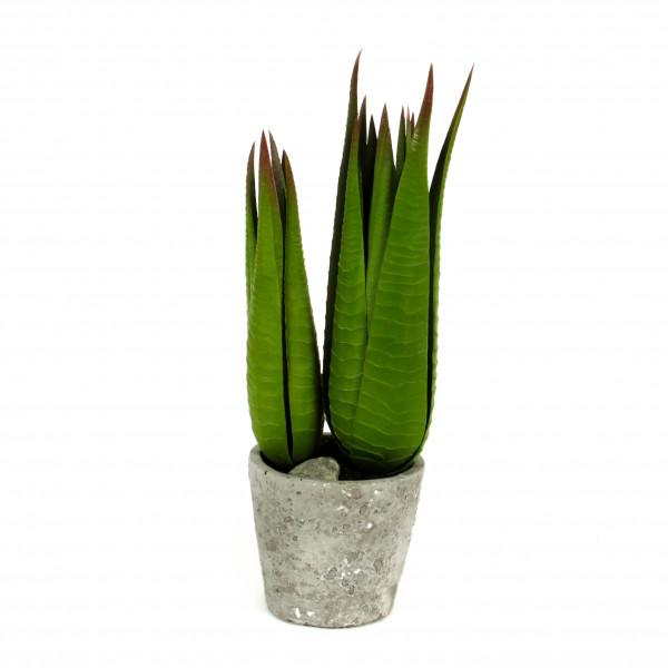 Sanseveria getopft, 36 cm