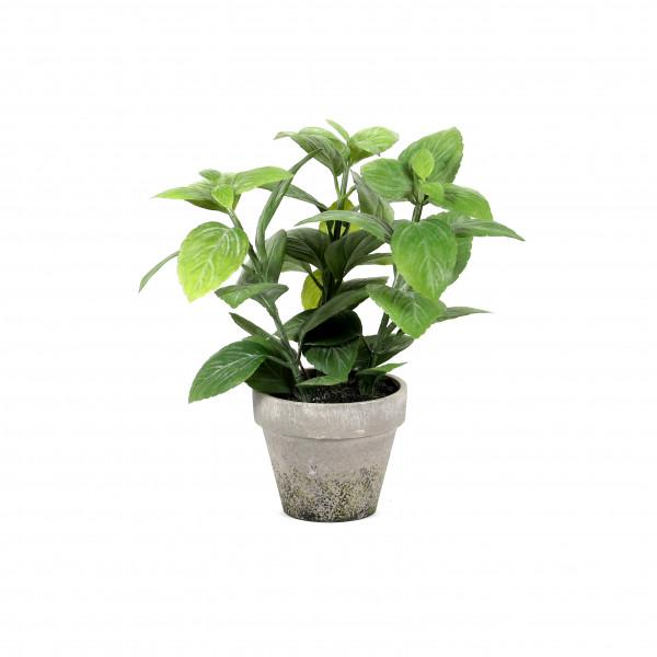 Salbei getopft, 23 cm, grün