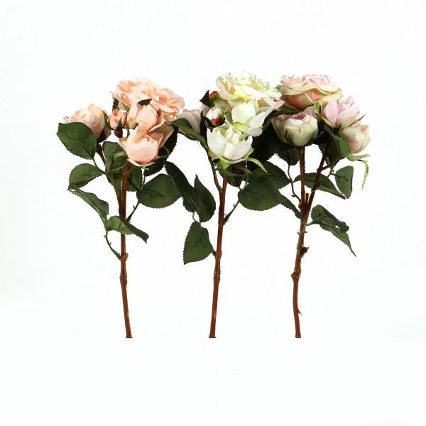 Teerose Brighton , 39 cm, 2 Blüten 3 Knospen