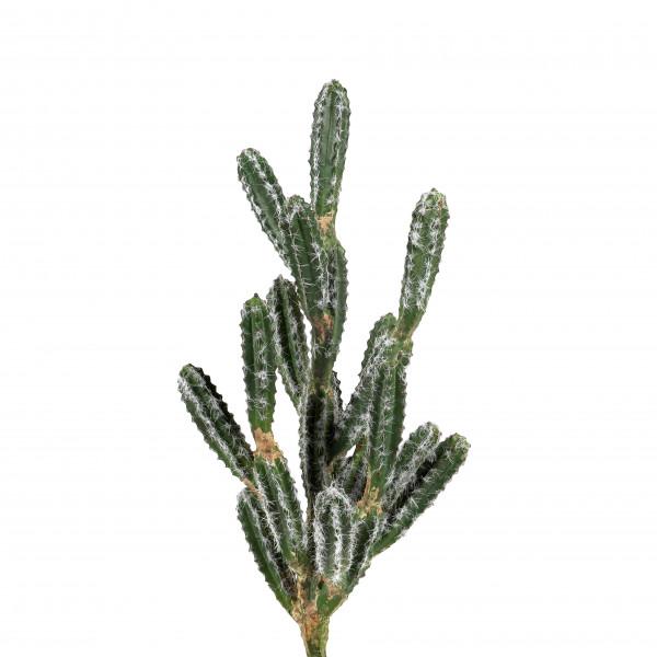 Kaktus-Zweig, 63 cm
