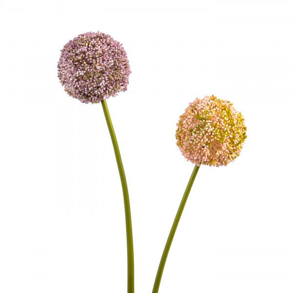 Allium, 71cm, pink/mauve sort.