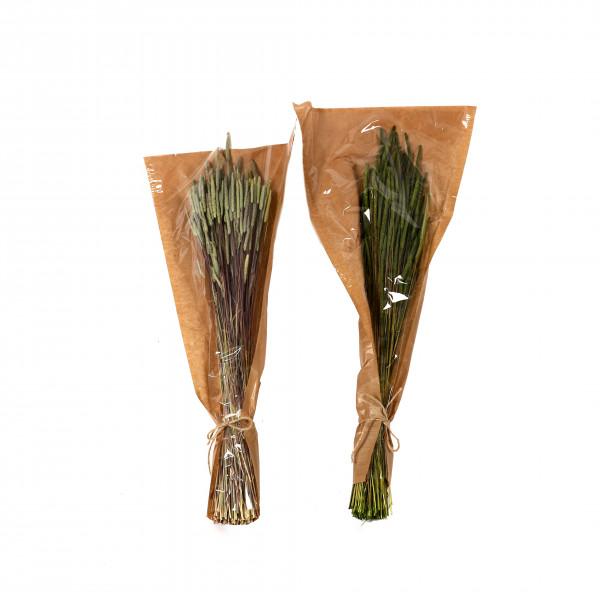 Phleum Pratensis 50-60 cm Bund 100 gr. apfelgrün