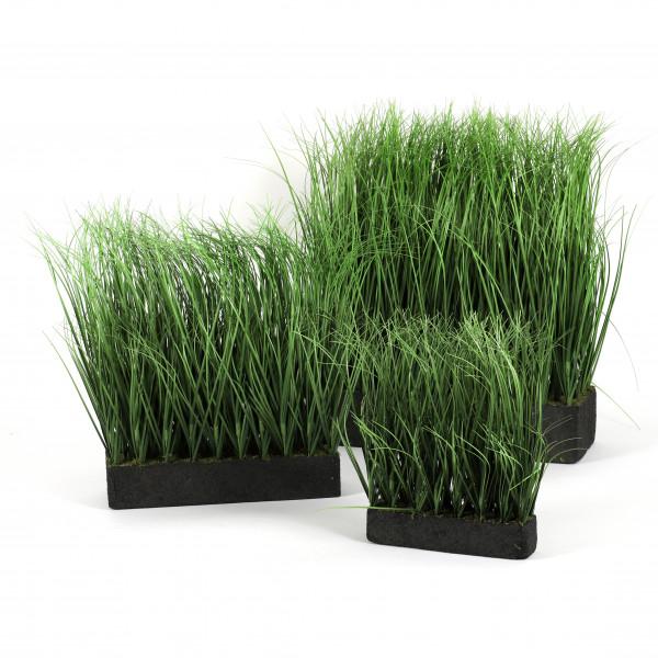 Gras auf Moosplatte
