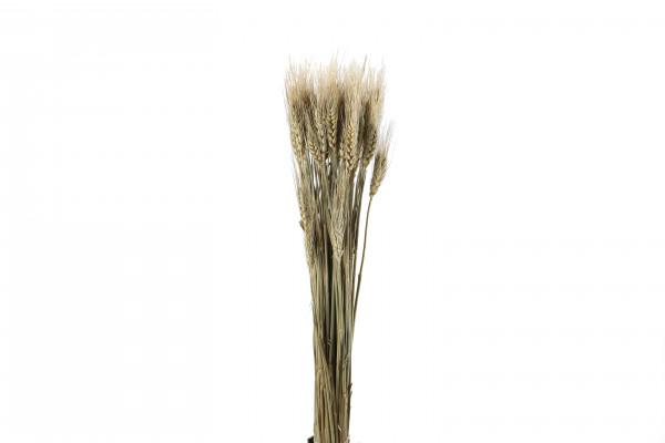 Weizen natur 50-70 cm Bund 70 g