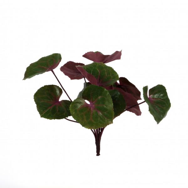 Ligularia-Busch, 25cm,rot-grün