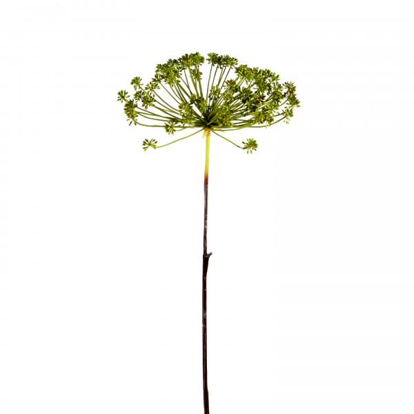 Dillpflanze, 107cm, grün