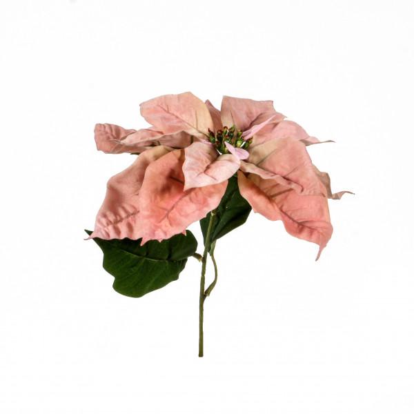 Poinsettia-Pick, 30 cm,apricot -pink