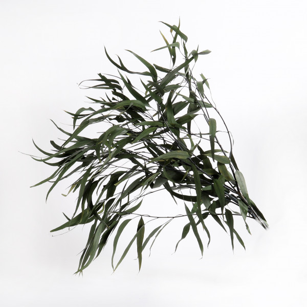 Eukalyptus longiforum Btl. x300 gr. grün