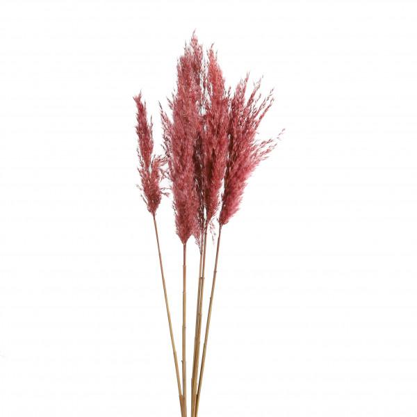 Gigant Reed Bundle x 5 Stück soft rose