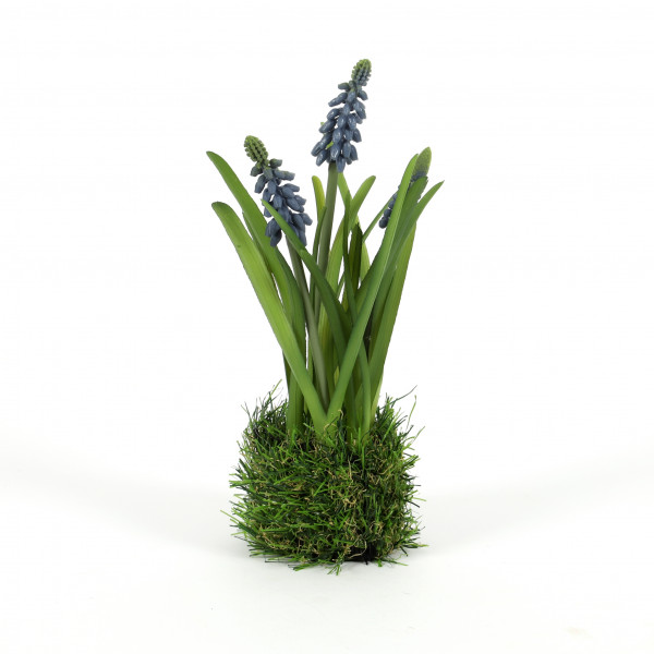 Muscari x 3 im Gras, 23 cm