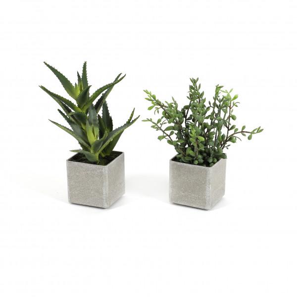 Aloe getopft, 22.5cm, grün