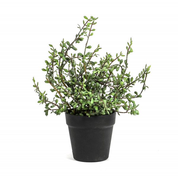 Senecio getopft, 43 cm, grün