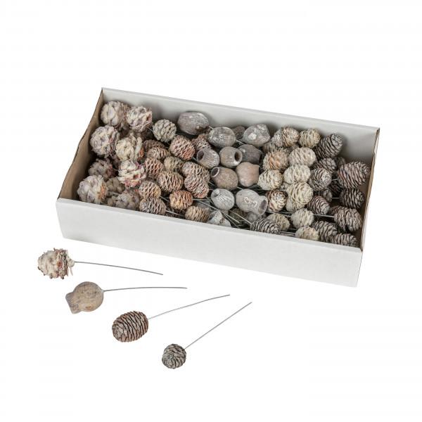 Sortiment Zapfen am Draht stonewashed (Fensterkarton x 100 Stück)