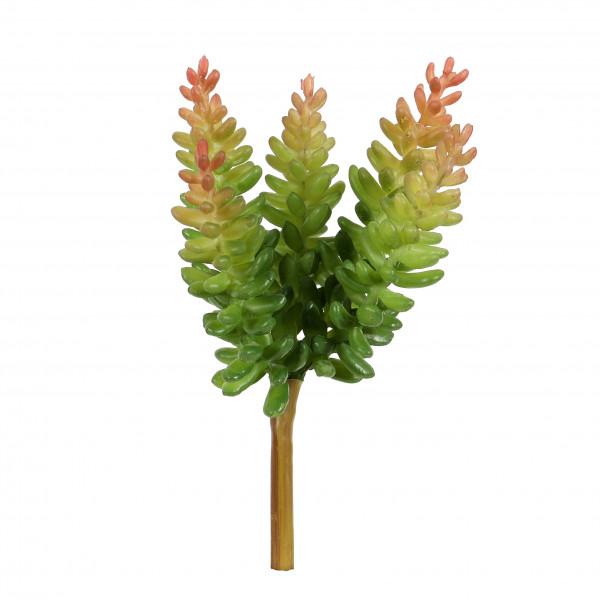 Crassula, 17 cm, grün-mauve