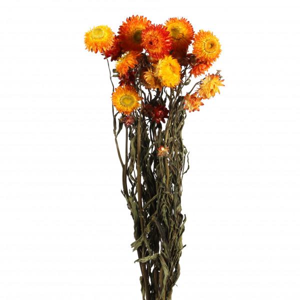 Helichrysum orange Bund 250 gr