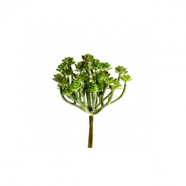 Sedum, 18 cm, grün