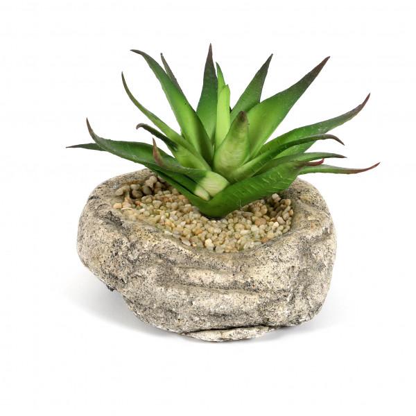 Sukkulente auf Stein, getopft, 10cm grün
