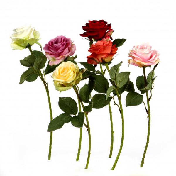 Rose x 1, kurzstielig, 38 cm