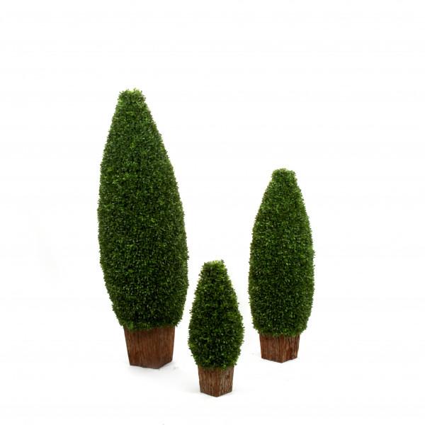 Buchsbaum Zapfenform , 60cm, grün