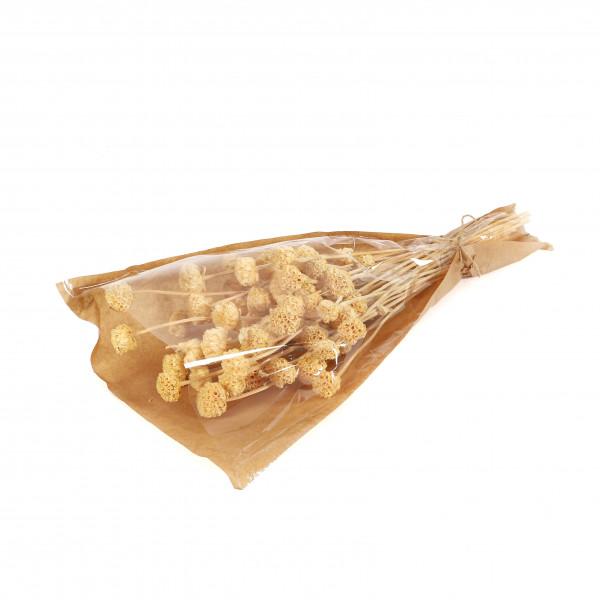 Honeycomp Flower 100 gr