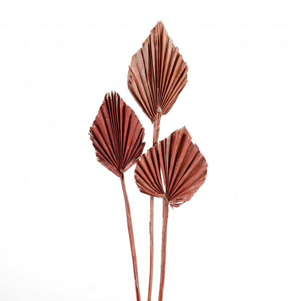 Palmspeer ( Polybeutel x 100 St.) Orange white washed