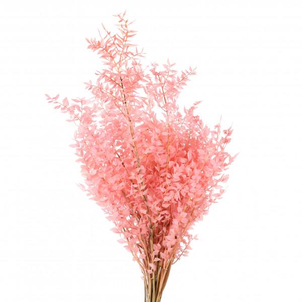 Ruscus zart rosa Blt x 500 gr