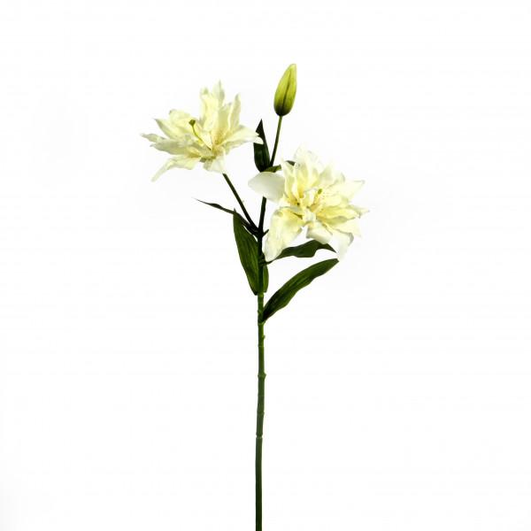 Tiger-Lilie, 64 cm, 2 Blüten, weiß