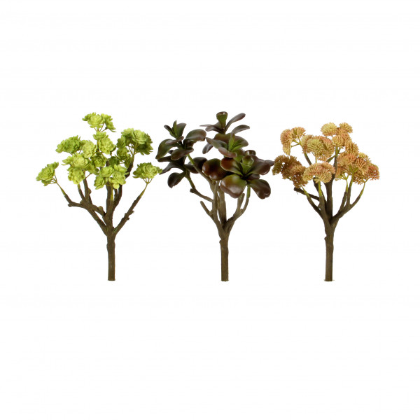 Sedum-Busch,25 cm, grün-braun