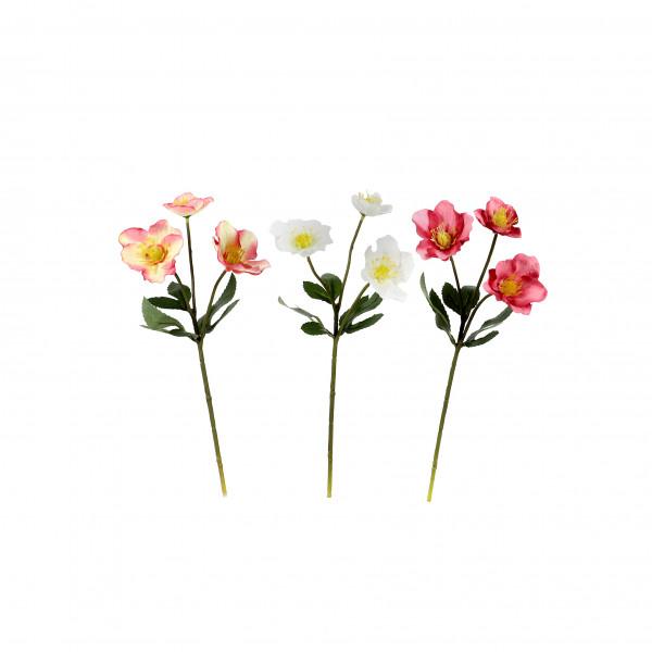 Christrose x 3, 33.5 cm