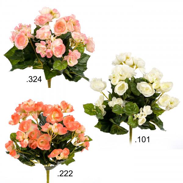 Begonie, 72 Blüten