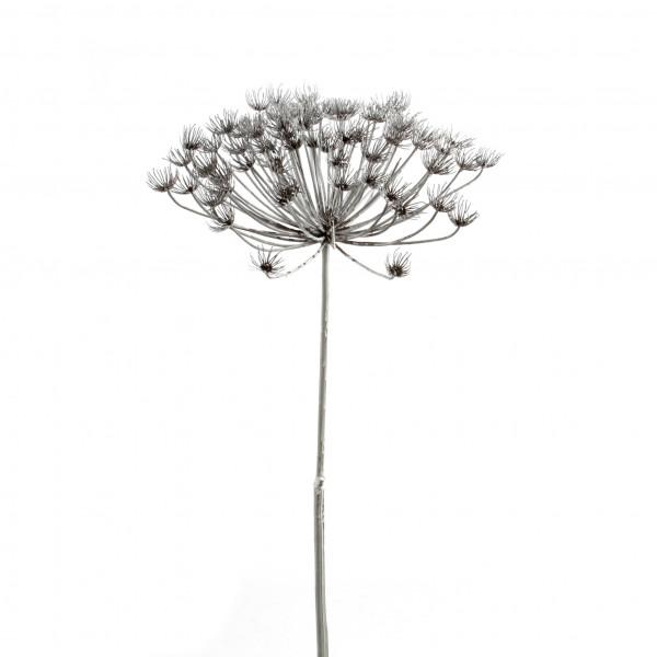 Allium, 105cm, weiß-gefrostet