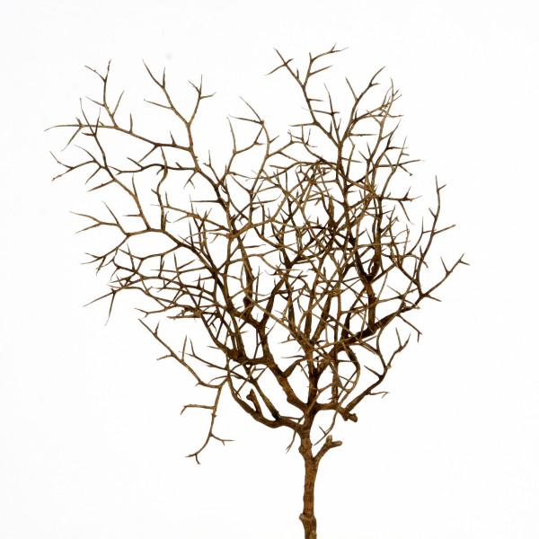 Weidenzweig, 40 cm, braun