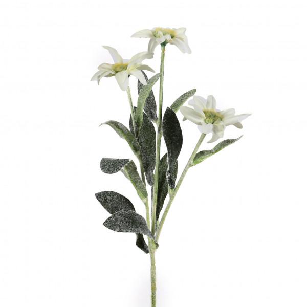 Edelweiss x 3, 38 cm, creme