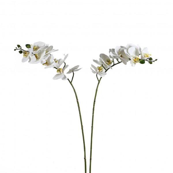 Phalaenopsis-Zweig x 8 Blüten, 77 cm, weiß weiß