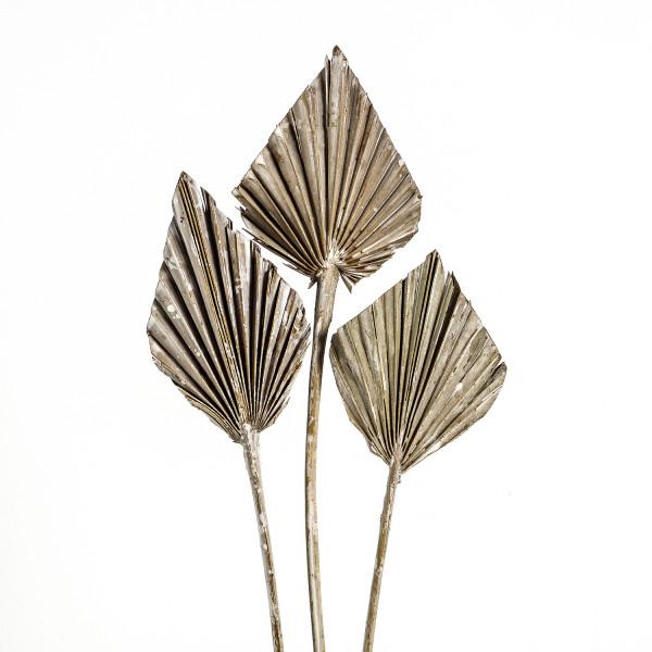 Palmspeer frostet (Polybeutel x 100 Stück)