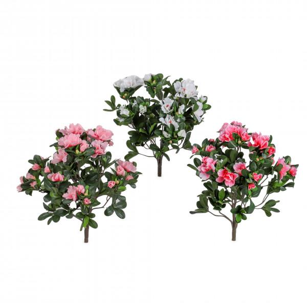 Azalee, 74 Blüten
