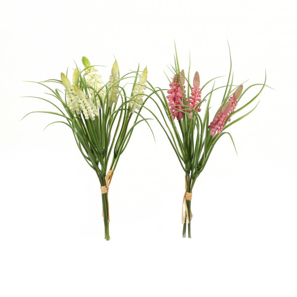 Muscari, 25 cm
