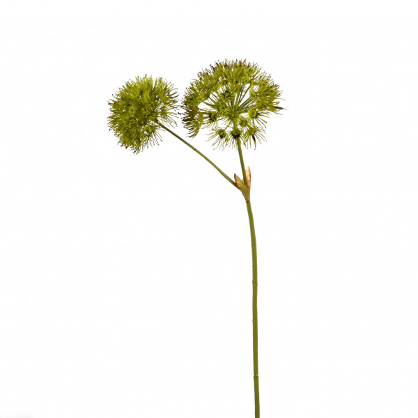 Allium x 2, 79cm, grün