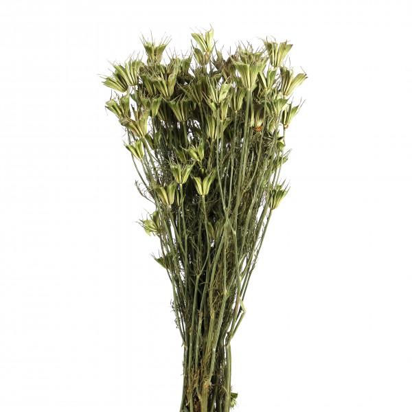 Nigella orientalis Bund 250 gr