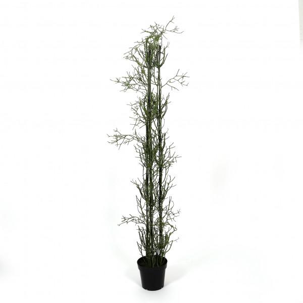 Rhipsalis getopft, 185 cm