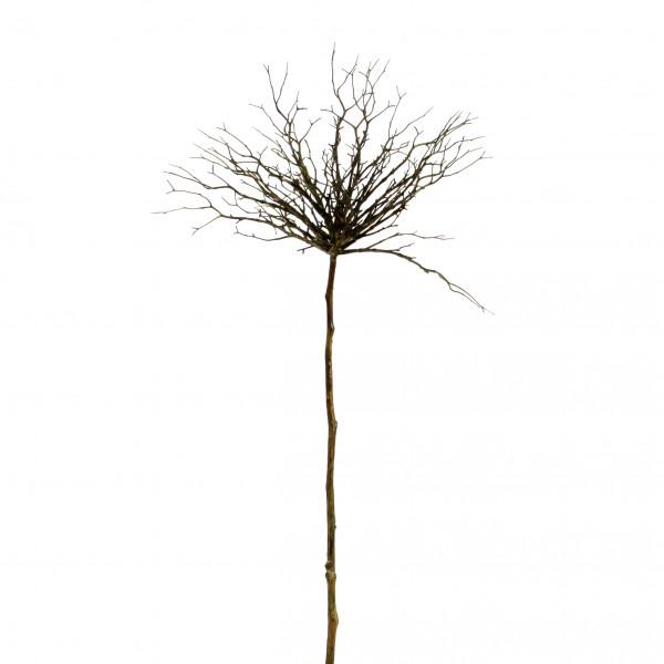 Pappelgeäst, groß, 100 cm, braun