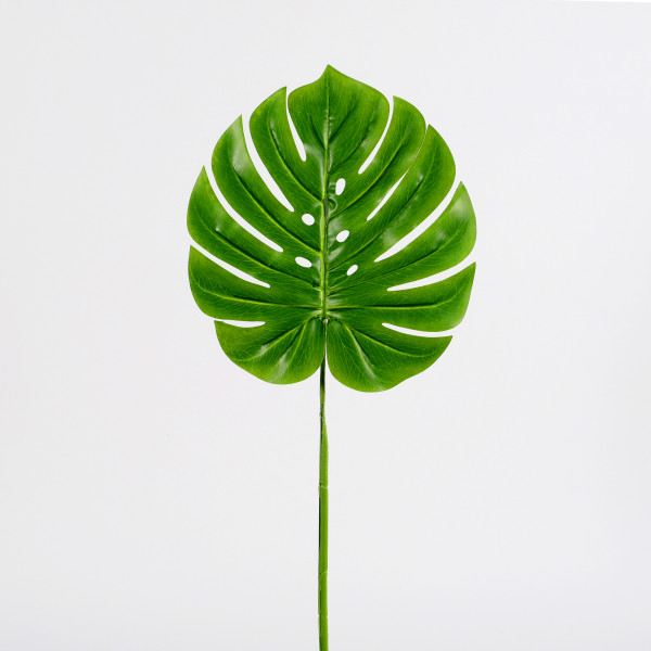 Monstera Blatt, grün, groß