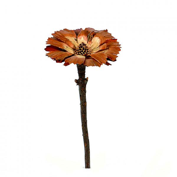 Protea Repens Cut 8-9 cm creme (Originalkarton a 350 Stk.)