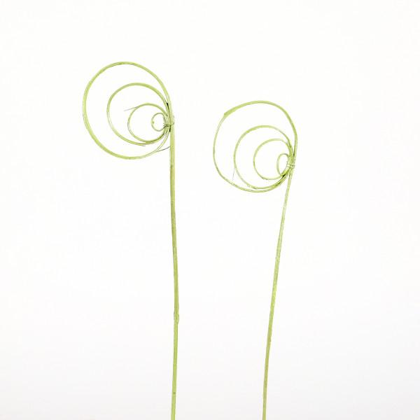 Cane Coil(Fensterkarton x 40 St. ) metallic grün