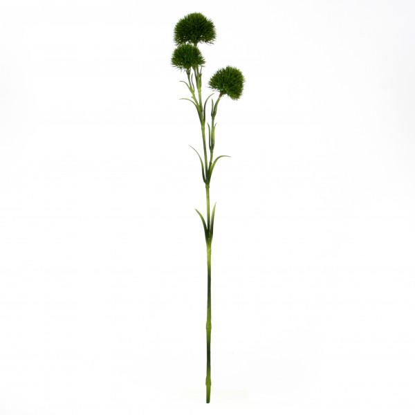 Bartnelke x 3, 60cm, grün